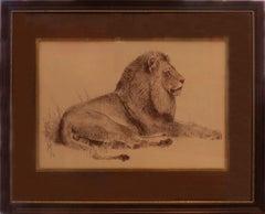 """""""Recumbant African Lion"""""""
