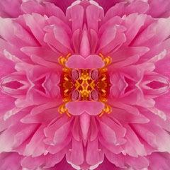 Frazel Dazel III, Color Photography, Flowers, Floral, Botanical, Pink