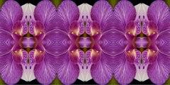 Wonderment V, Color Photograph, Limited Edition, Flower, Botanical, horizontal