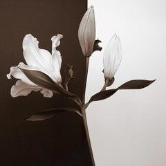 Yin-Yang I, 30x30, Unframed, Black & White Photograph, Flowers, Botanical