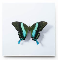 A Thing Of Beauty #4 (Papilio)