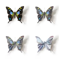 A Thing of Beauty #6 (Graphium)