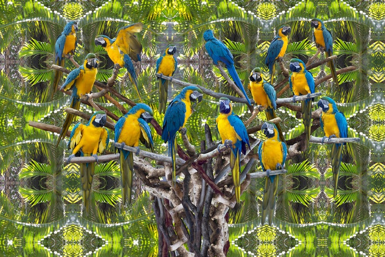 Katherine Marie McKee (KASHA) Figurative Photograph - Parrot Tree Conceptual Photography