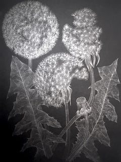Three Dandelions with Bud, Small Framed Silver Botanical Drawing on Black Paper