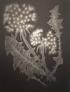 Two Dandelions C, Silver Botanical Drawing On Black Paper