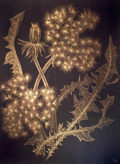 Dandelions with Bud, Small Botanical Drawing on Black Paper Made with 14K Gold