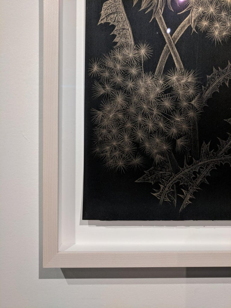 This delicate botanical drawing is made with 14 karat gold on black paper. The exploration of ephemerality, and the fragility of a dandelion gone to seed, its leaves and buds are the focus of this series by Margot Glass. The exquisite beauty of the