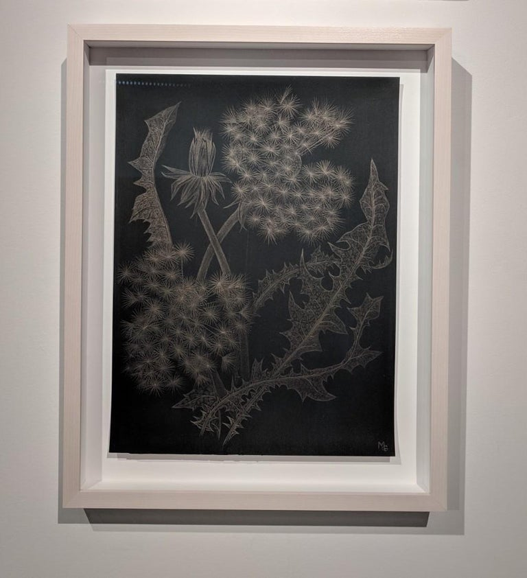 Dandelions with Bud, Small Botanical Drawing on Black Paper Made with 14K Gold - Contemporary Art by Margot Glass
