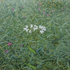 Announcement, Small Botanical Landscape of White and Pink Flowers in Green Field