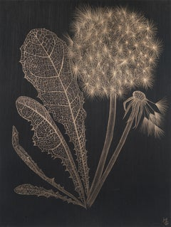 Dandelion with Full Leaf, Botanical Drawing on Black Paper made with 14K Gold