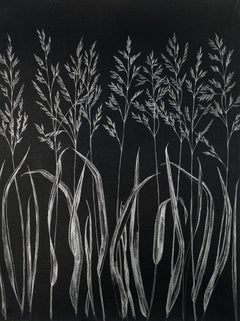 Grasses, Metallic Silver Botanical Drawing made with Graphite on Black Paper