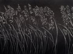 Grasses One, Silver Botanical Drawing on Black Paper made with Graphite