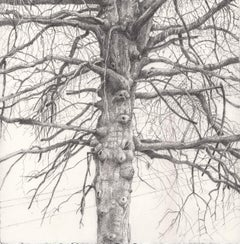 Parking Lot Tree in Winter, Landscape Drawing of Bare Tree with Telephone Lines