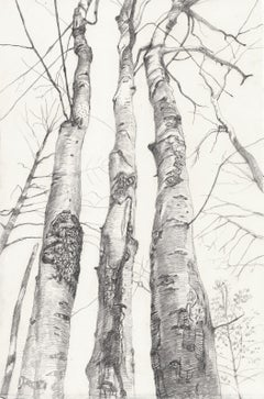 Three Beech Trees, Graphite Landscape Drawing of Three Trees in Gray on White