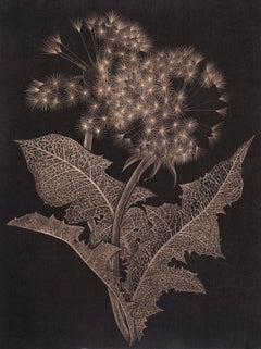 Two Dandelions Three, Botanical Drawing on Black Paper made with 14K Gold