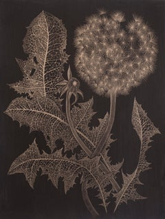 Dandelion with Bud Two, Botanical Drawing on Black Paper made with 14K Gold