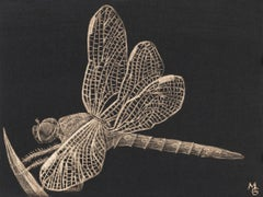 Dragonfly, Goldpoint Drawing with Winged Insect in Gold on Black Background