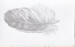 Downy Feather, Small Silverpoint Drawing of Bird's Feather in Soft Gray on White