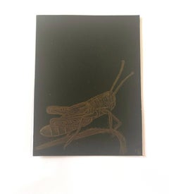 Grasshopper, Goldpoint Drawing with Insect on Twig in Gold on Black Background