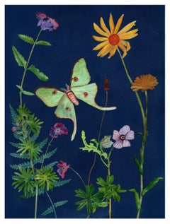 Cyanotype Painting, Luna Moth, Daisy, Violets, Botanical Painting Yellow on Blue