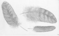 Three Feathers, Silverpoint Drawing of Bird's Feathers in Soft Gray on White