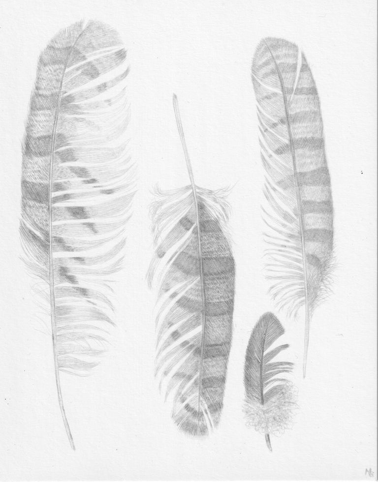 Margot Glass Still-Life - Feather Group Two, Silverpoint Drawing of Bird's Feathers in Soft Gray on White