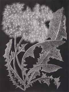 Two Dandelions One, Metallic Silver Botanical Drawing, Graphite on Black Paper