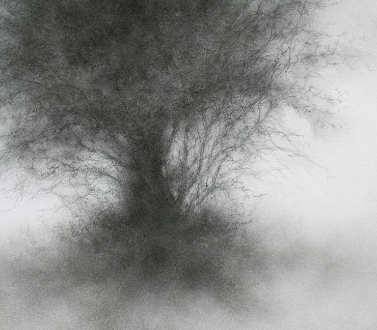 Whippersnapper (Realistic Charcoal Landscape Drawing on Panel of a Large Tree) For Sale 8