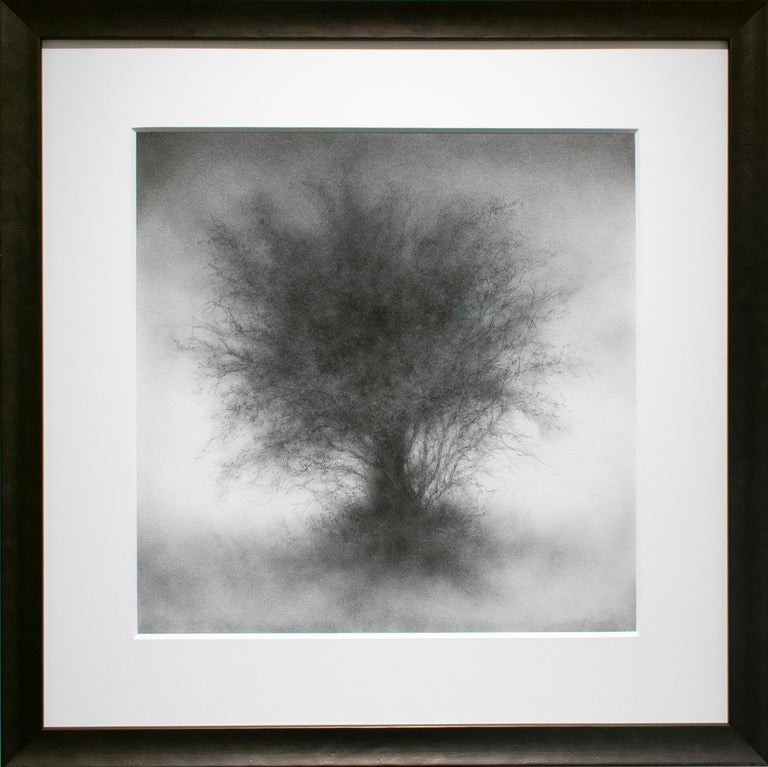 Whippersnapper (Realistic Charcoal Landscape Drawing on Panel of a Large Tree) For Sale 1