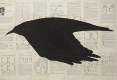 Raven Reads the Lines: Chalk Drawing of Black Bird on Vintage Book Pages
