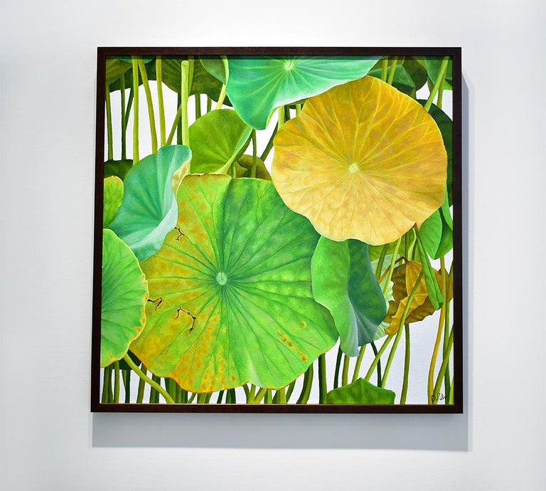 Photorealist still life painting of green and soft yellow lotus leaves on a light grey background Lotus Twenty-Four, 2019 Oil on canvas, Signed lower right 30 x 30 inches in dark wood framing Wire backing, ready to hang   Painted with the exactness