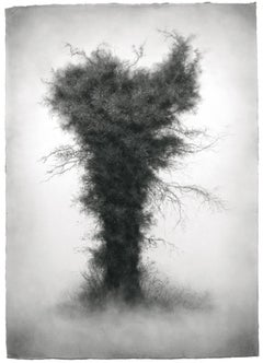 Wallflower (Moody Charcoal Landscape Drawing of Tree)