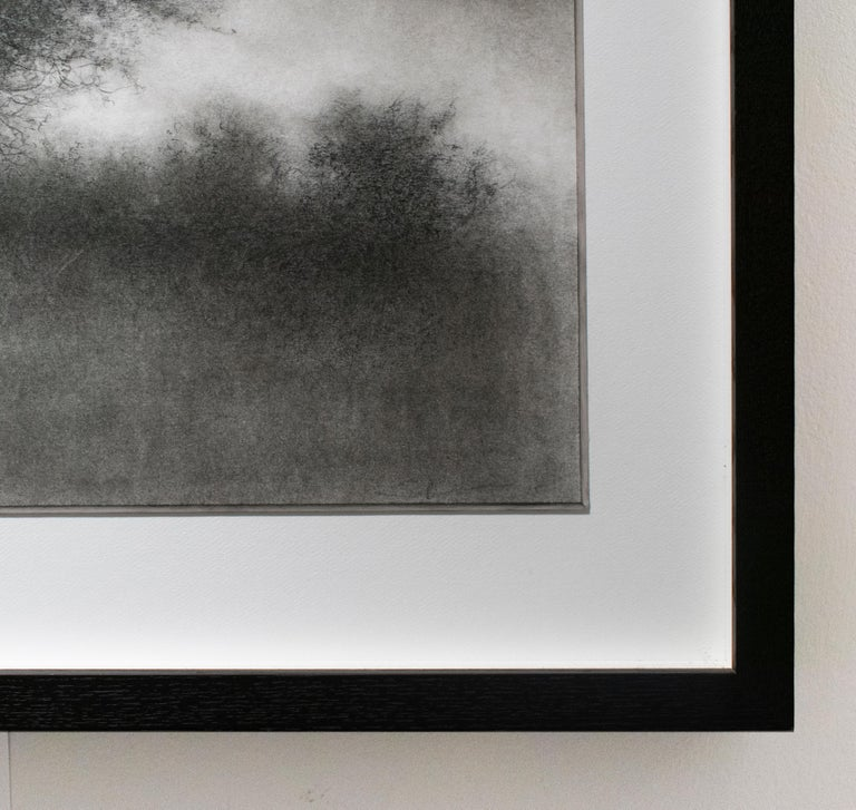 Landscape with Tree (Realistic Charcoal Drawing of Trees in a Rural Landscape) - Gray Landscape Art by Sue Bryan