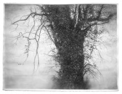 Beneath The Dripping Trees (Realistic Black & White Charcoal Landscape Drawing)
