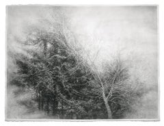 Fullness of the Wind (Framed Black & White Charcoal Landscape Drawing of a Tree)