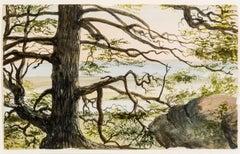Hemlock--Selden's Neck, Lyme, Connecticut