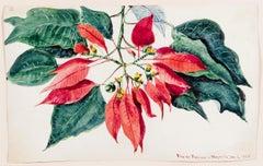 Flox de Pascua-Magnolia (Tropical Trees & Plants)