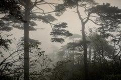 """""""Alba Alata 2"""" (Winged Dawn 2) - Landscape black and white photograph"""