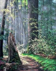 Through A Forest Wilderness