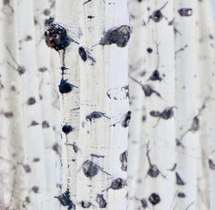 White Birches #5