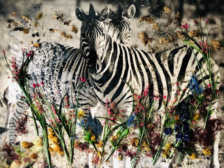 Maryam Ego-Aguirre Black and White Photograph - Zebra Kenya