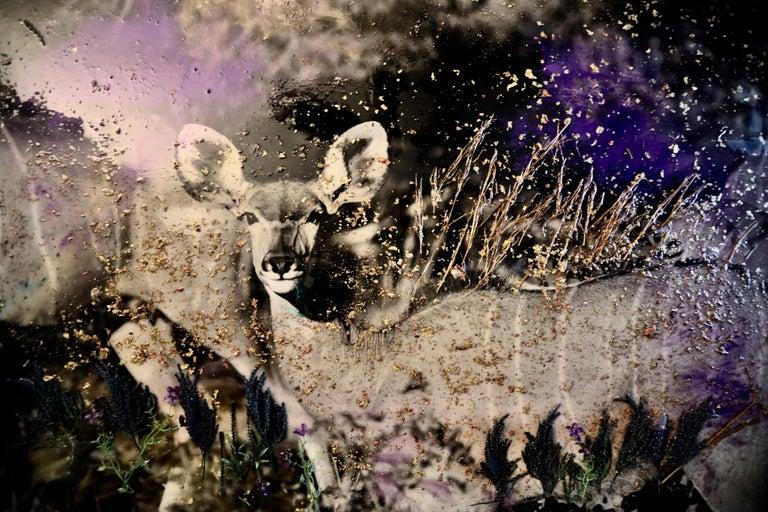 Maryam Ego-Aguirre Black and White Photograph - Kudu Namibia