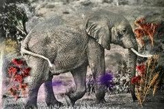 Storybook Elephant