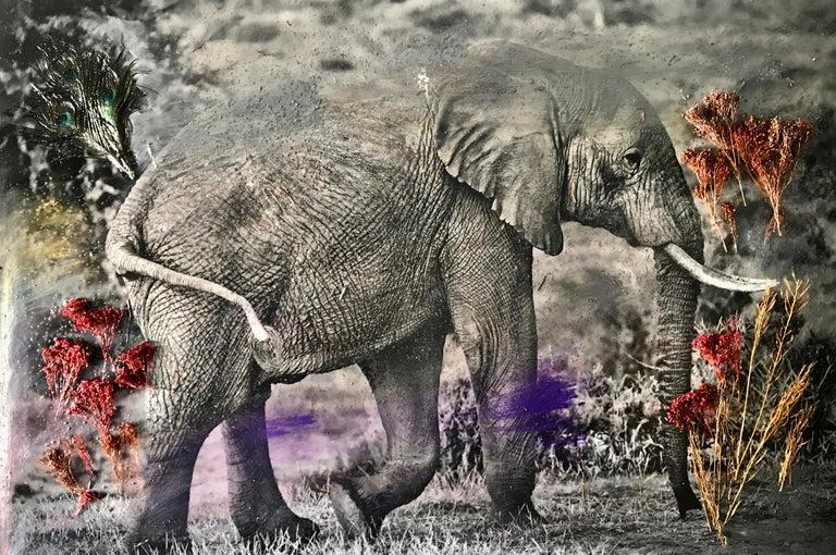 Maryam Ego-Aguirre Black and White Photograph - Storybook Elephant