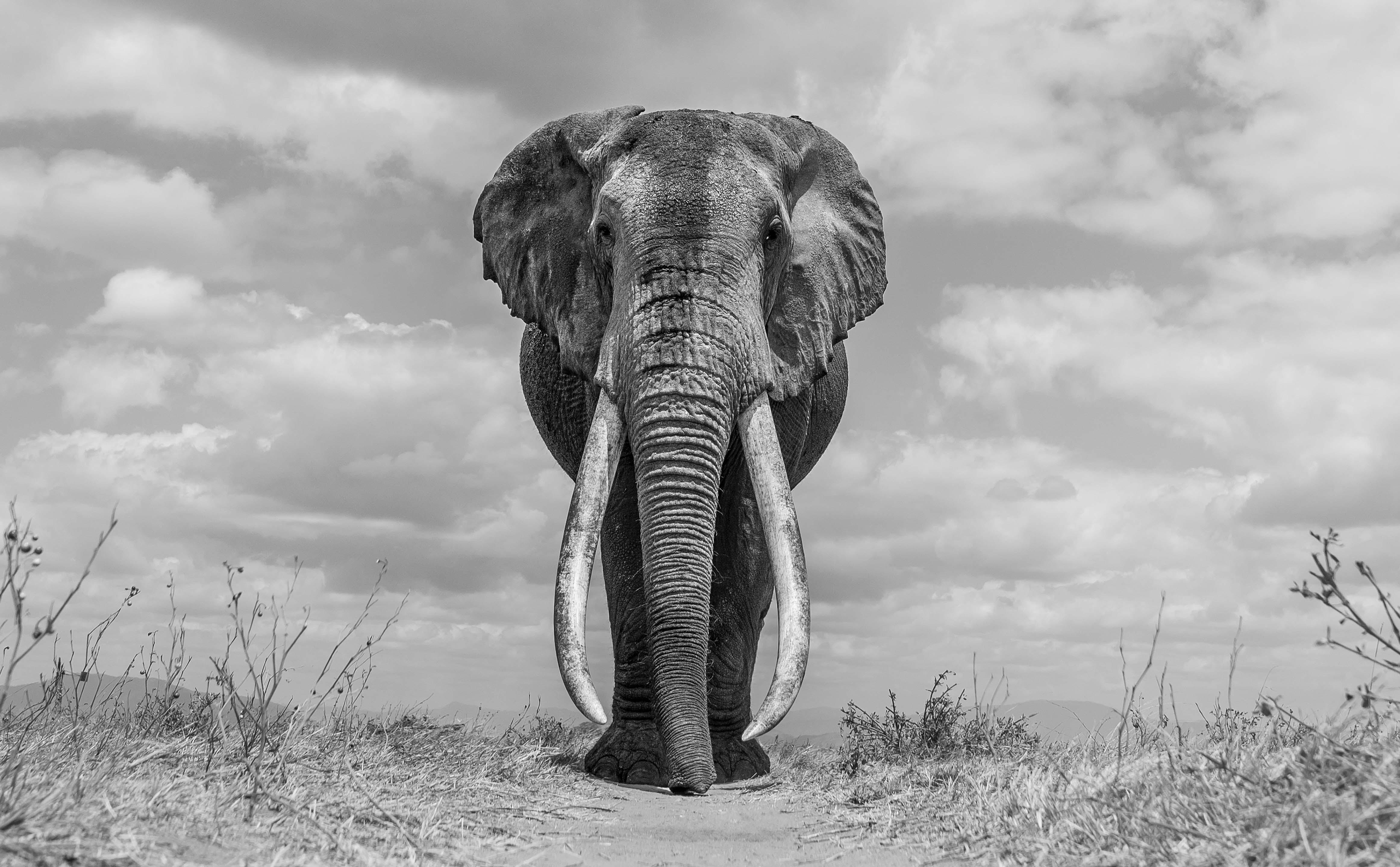 The Big Friendly Giant, Tsavo, Kenya.