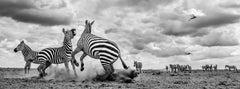 Drought, Tsavo, Kenya.