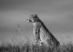 On the Look Out, Chyulu Hills, Kenya.