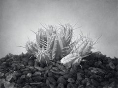 GIANT, black and white, hyper-realism, monochrome, cactus, still-life, succulent