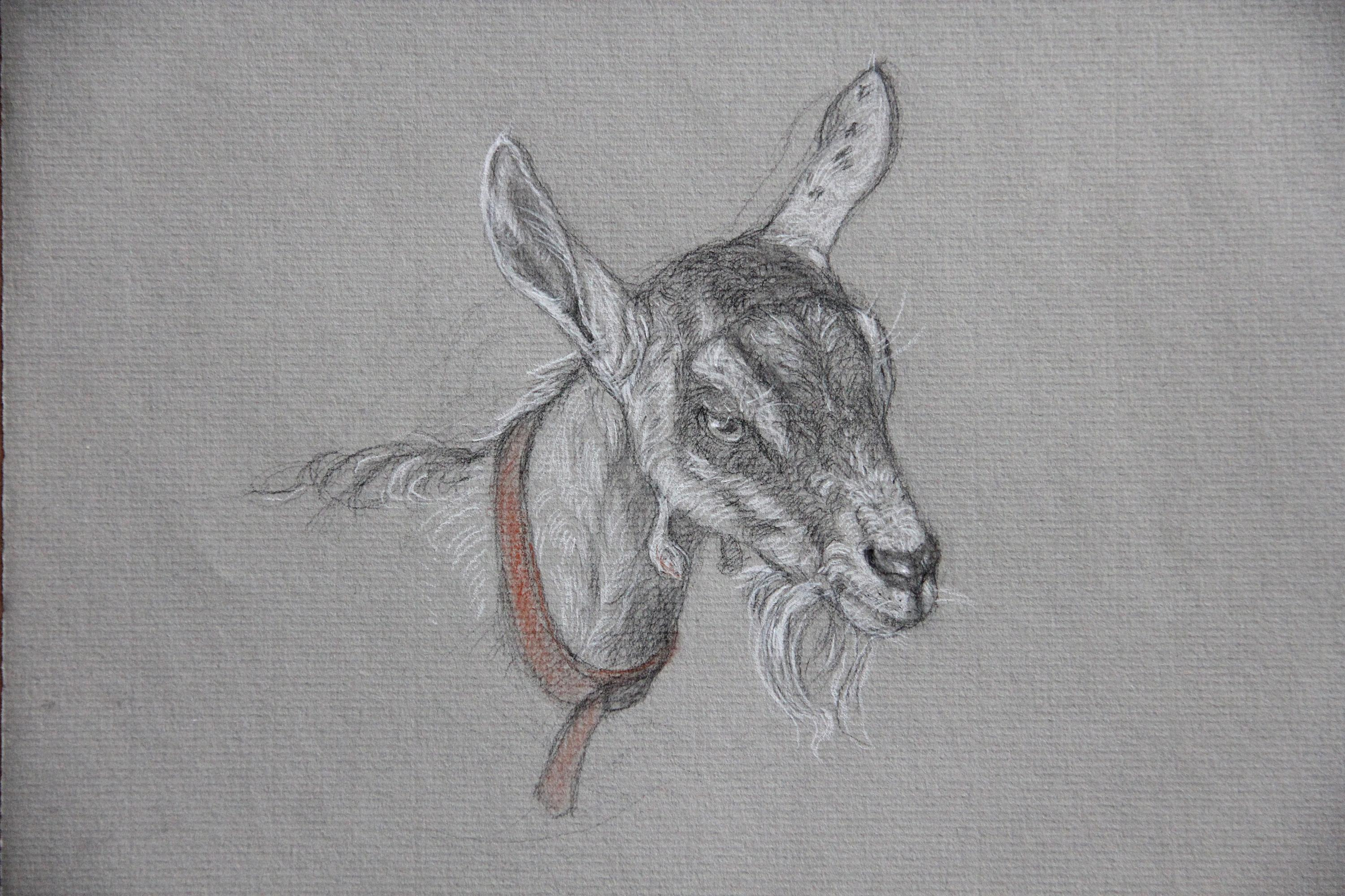 GOAT WITH ORANGE COLOR, animal, portrait, drawing, charcoal, photo-realism