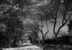 Further Lane (East Hampton)